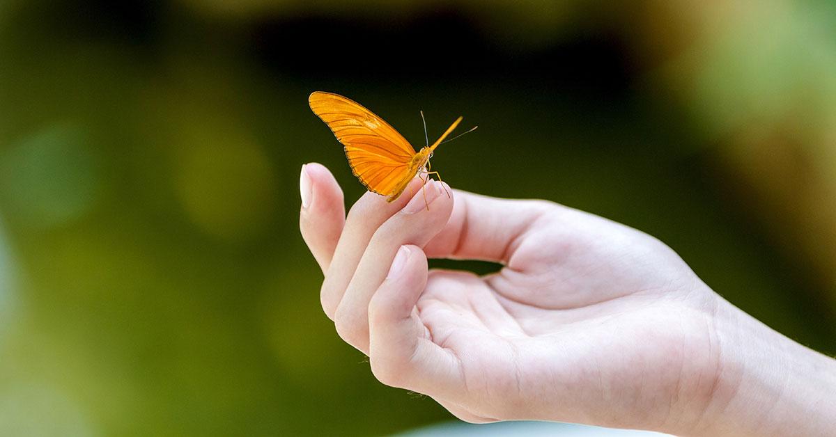 Бабочки в руках картинки, анимацией