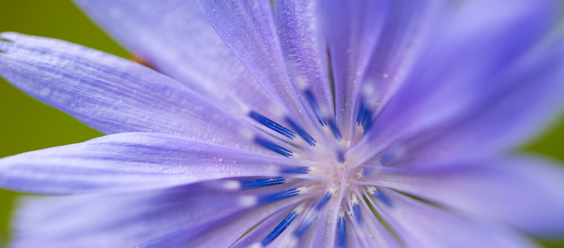 How The Color Purple Can Lead You To Your Destiny