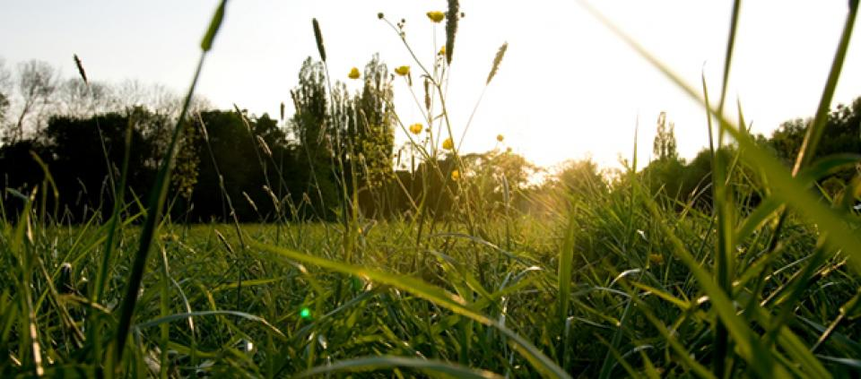 10 Ways to Beat Allergies with Ayurveda | Kripalu