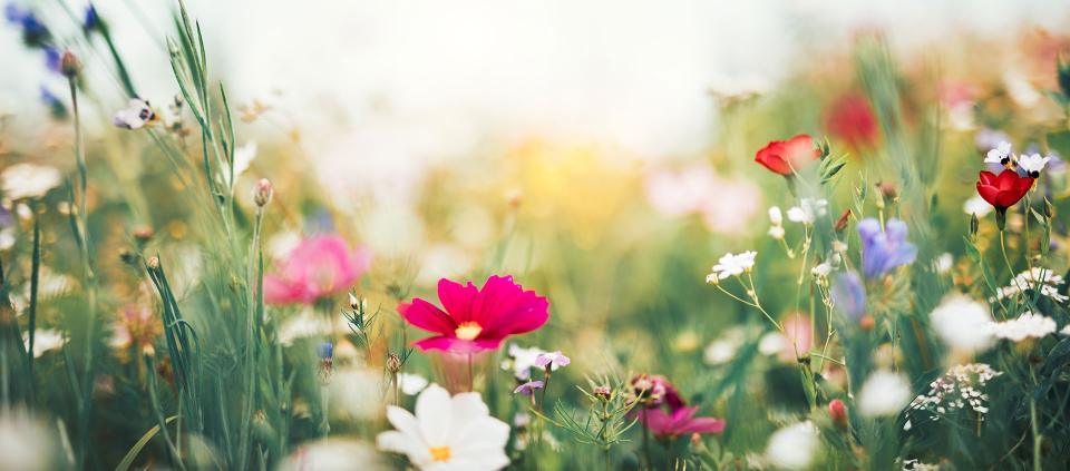 The Stories And Symbolism Of Spring Flowers Kripalu