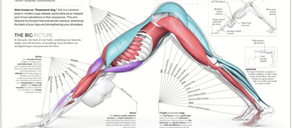Science Of Yoga An Excerpt Kripalu